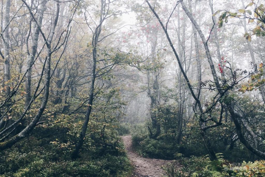 Feldberg bosque 2. Selva negra en tres dias