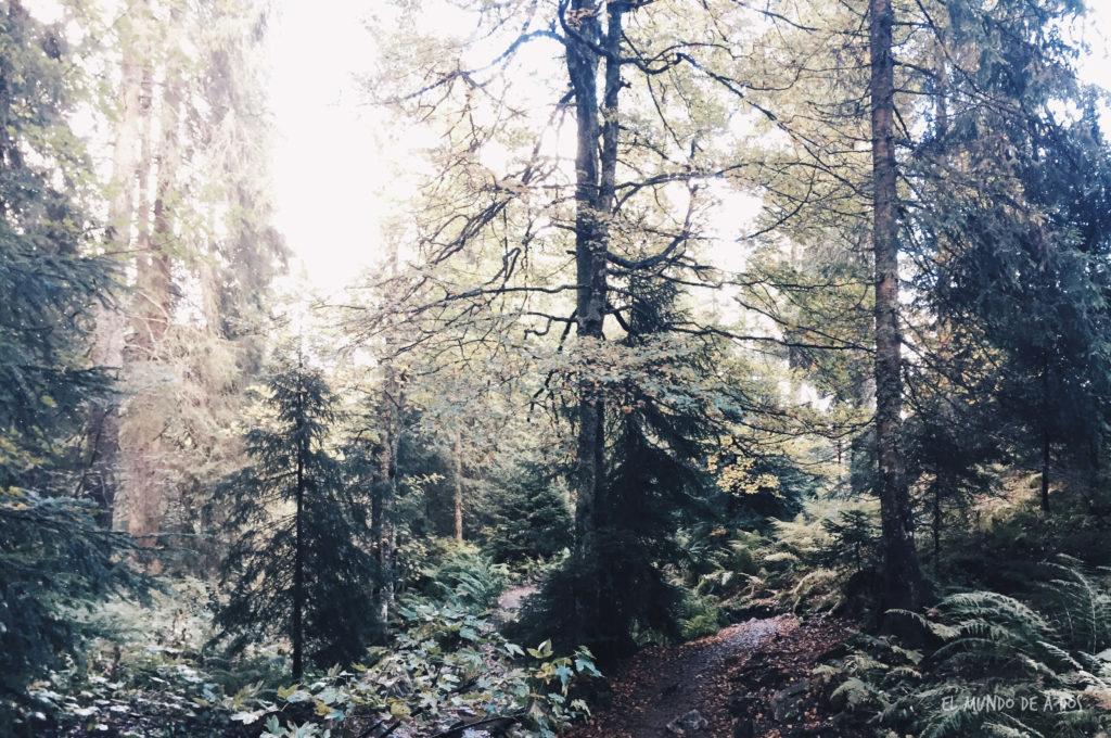 Feldberg bosque. Selva negra en tres dias