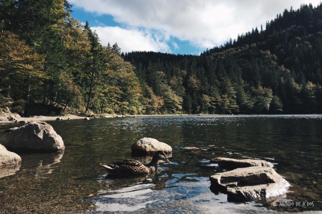 Feldberg lago. Selva negra en tres dias