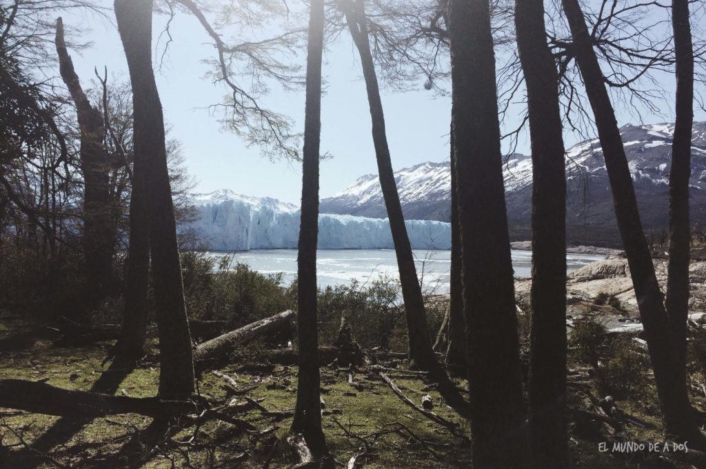 Bosque en el Parque Nacional Los Glaciares. Viajar a El Calafate