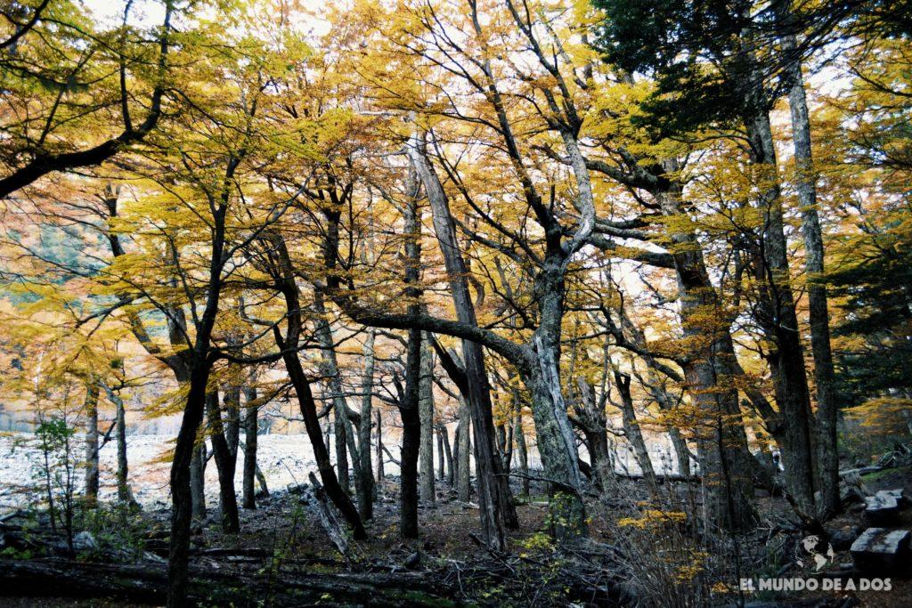 Bosque de Garganta del Diablo. Excursion Cerro Tronador