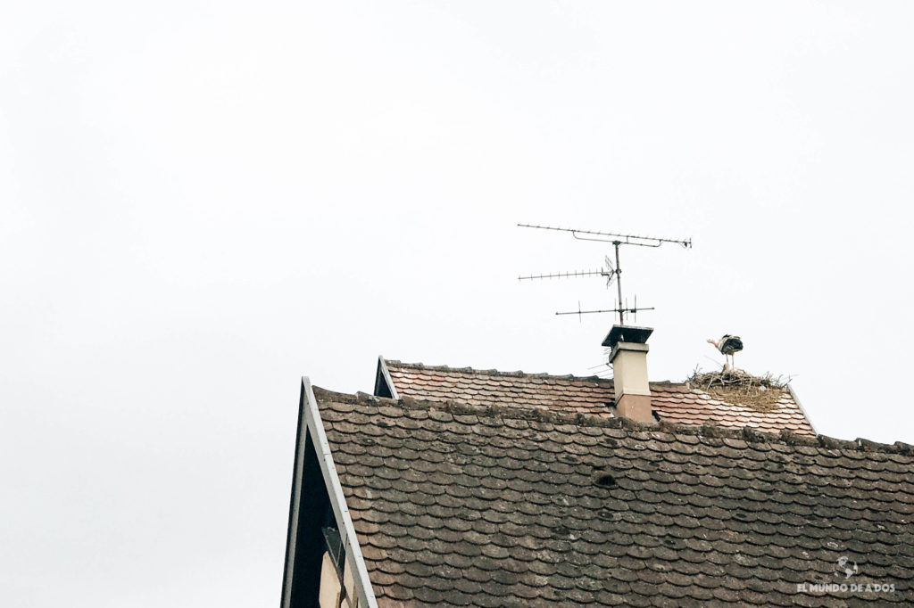 Cigüeñas de Eguisheim. Eguisheim Francia