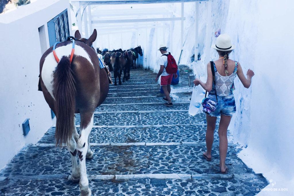 Bajando al puerto de Fira rodeados de burros. Caldera de Santorini