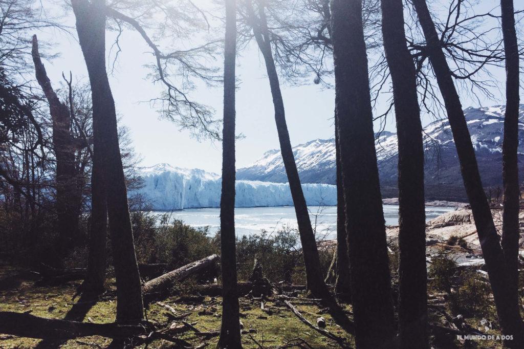 El glaciar desde el bosque. Minitrekking Perito Moreno