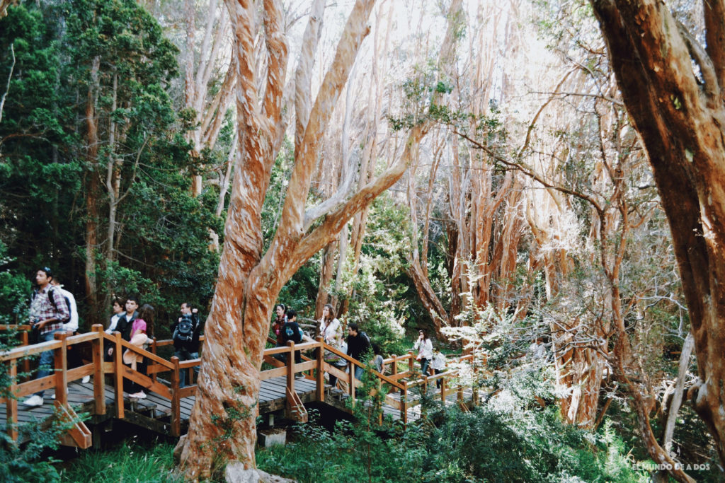 Pasarelas por el bosque de Arrayanes. Isla Victoria y Bosque de Arrayanes.