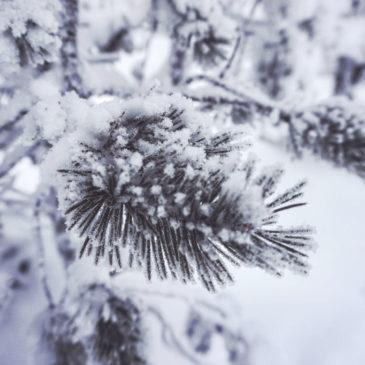 ¿Qué ver en Laponia en invierno? Descubrí los secretos de un mundo helado