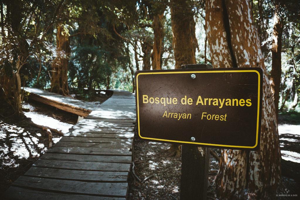 Bosque de Arrayanes en el Parque Municipal Llao Llao